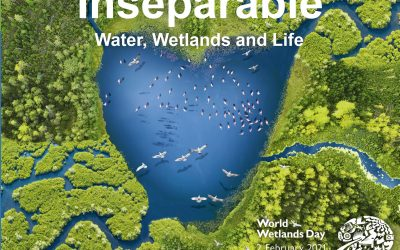 Vi feirer Verdens våtmarksdag