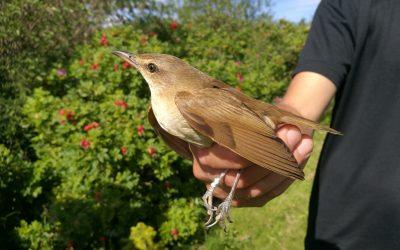 Suksessrik open dag på Revtangen ornitologiske stasjon